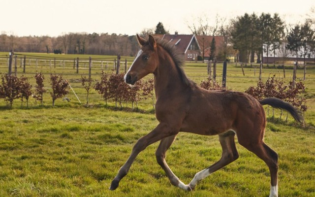 PaardenKees_WEB_404