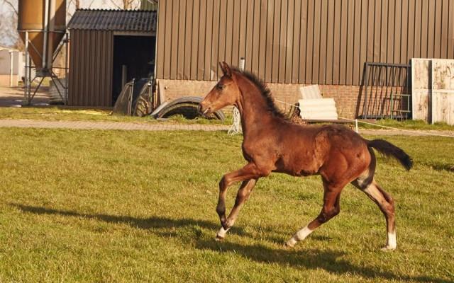 PaardenKees_WEB_431